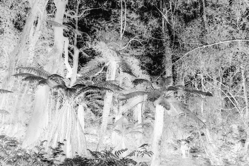 NCLR TREES 003, 2019