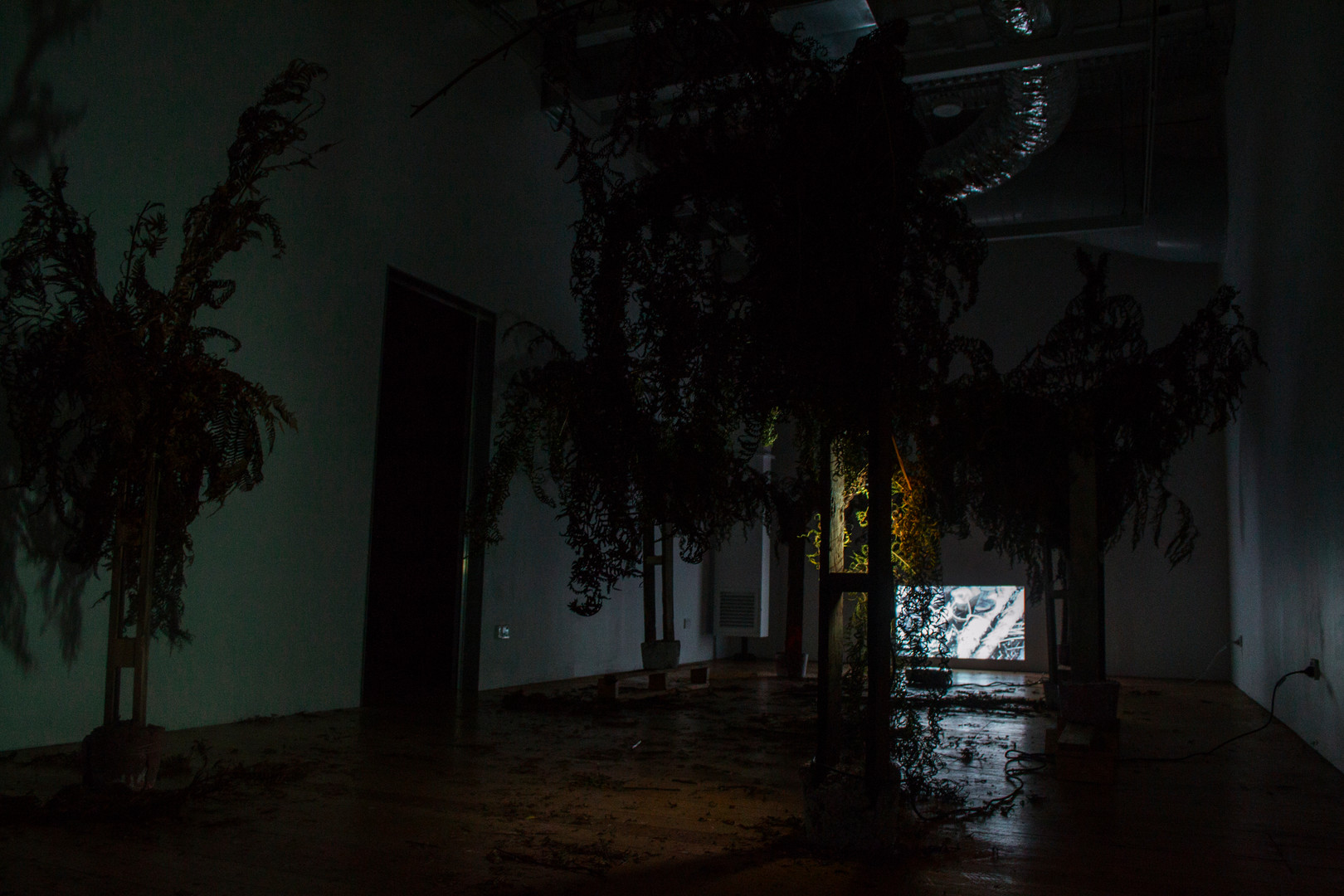 Nuclear Deforestation (Movement I), Survival of the Cyatheales, 2019