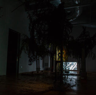 Nuclear Deforestation: Survival of the Cyatheales (Movement I), 2019