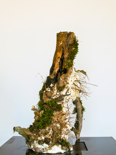 Preserved Limb No. 004, 2020