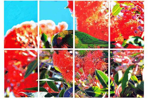 Musk Lorikeet in Red Flowering Gum, by Leith Semmens.