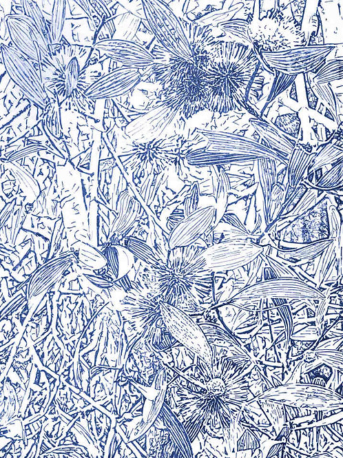 Hakea, Blue, by Leith Semmens