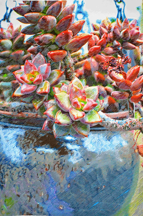 Succulent in Blue Pot, by Leith Semmens.