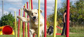 Dog%20agility%20slalom%2C%20sports%20competitions%20of%20dogs%20in%20the%20summer%20in_edi