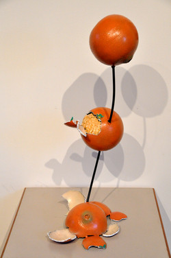 Life Cycle of an Orange