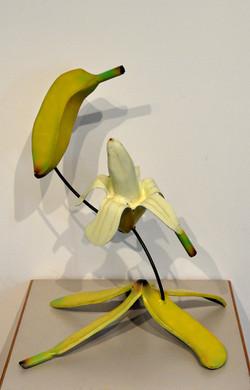 Life Cycle of a Banana