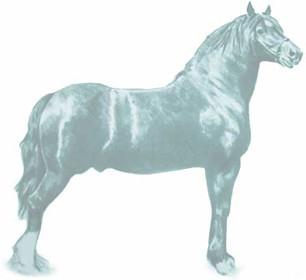 horseblue.jpg