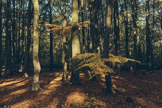 Drzewa w Parku Zdrojowym w Świnoujściu.