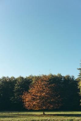 Baum im Kurpark