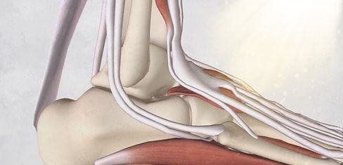 Ankle anatomy massage cpd courses