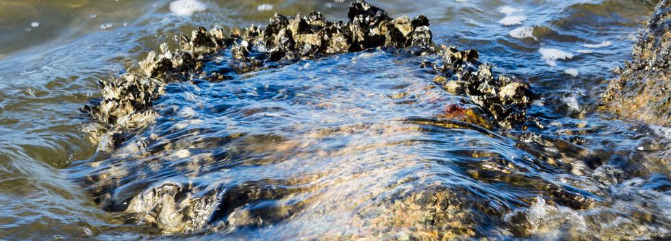 Rocks .jpg
