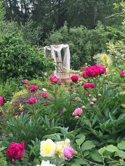 May is peony time