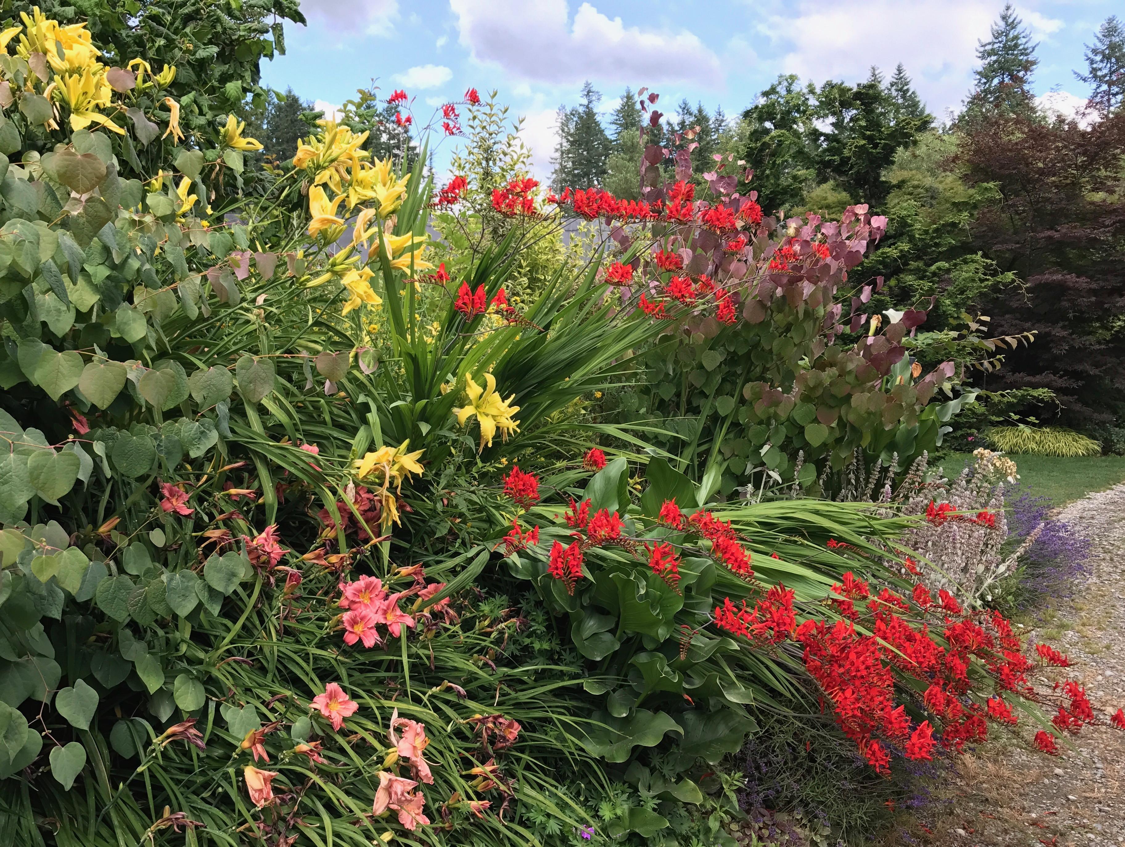 July 2017 gardens