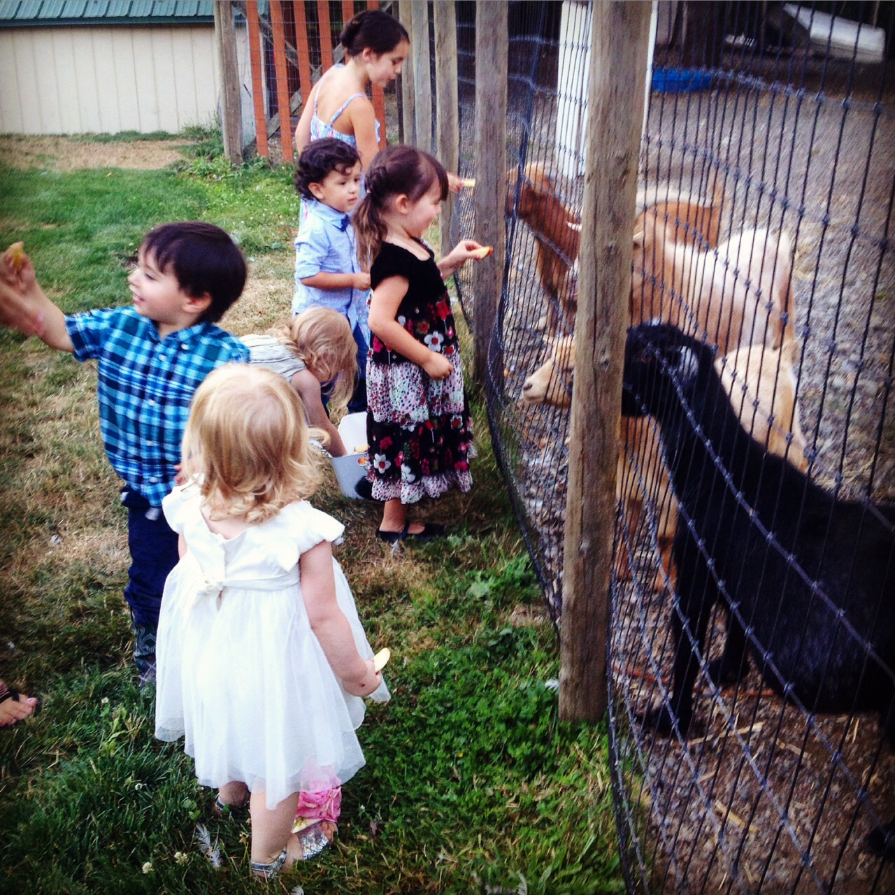 Goats! Kid friendly critters
