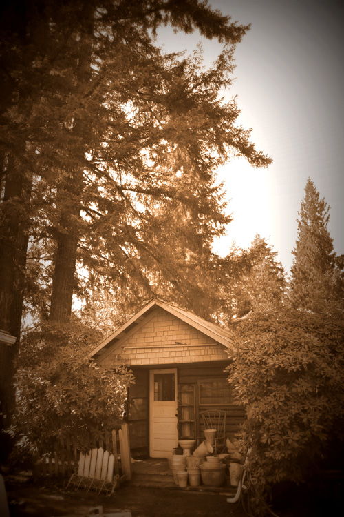 Old cabin in the nursery years