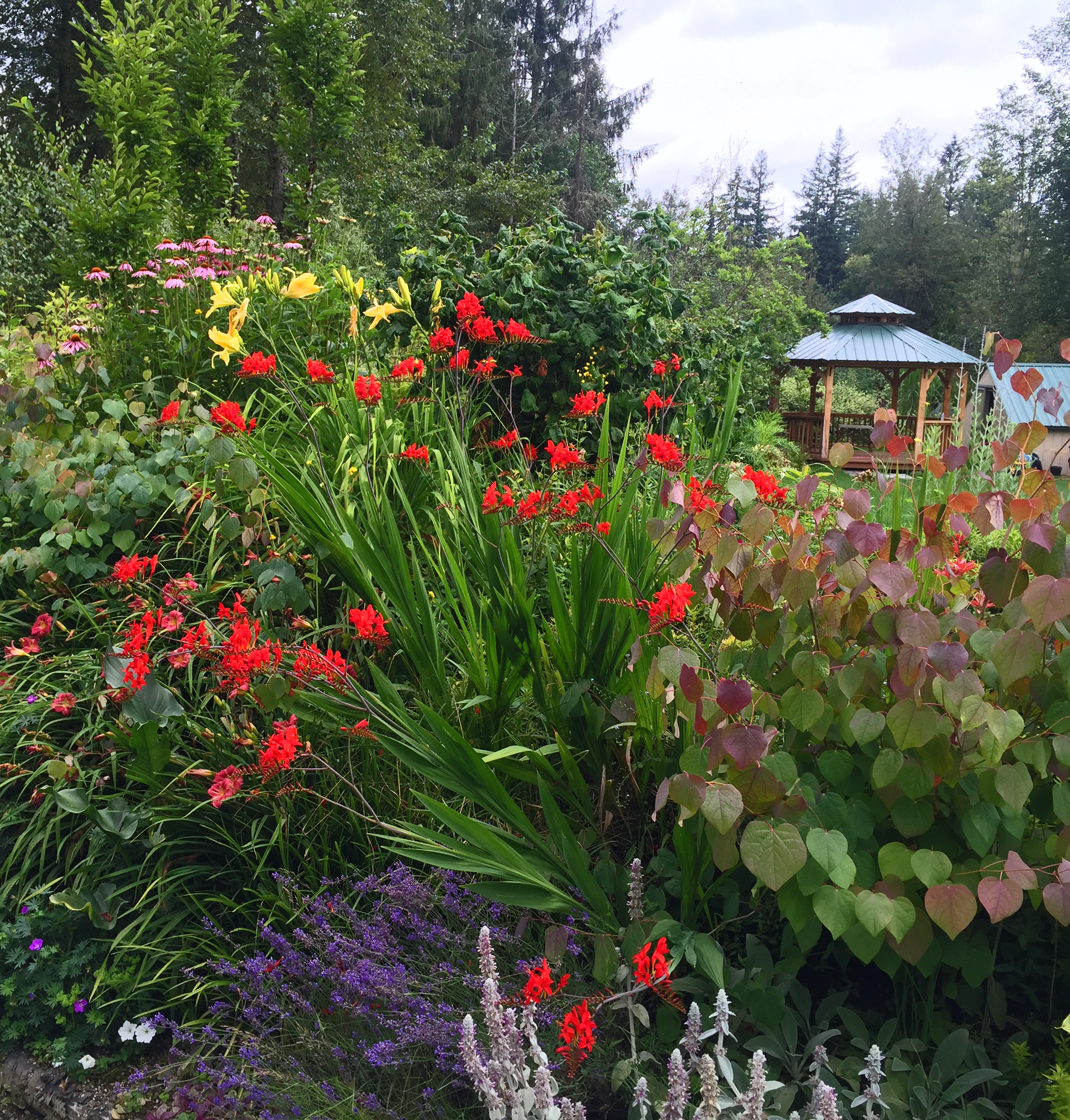 Gorgeous mid-July gardens