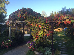 Fall color on the arbor