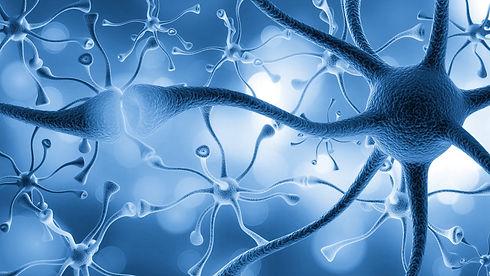 Neurons cells close up.jpg