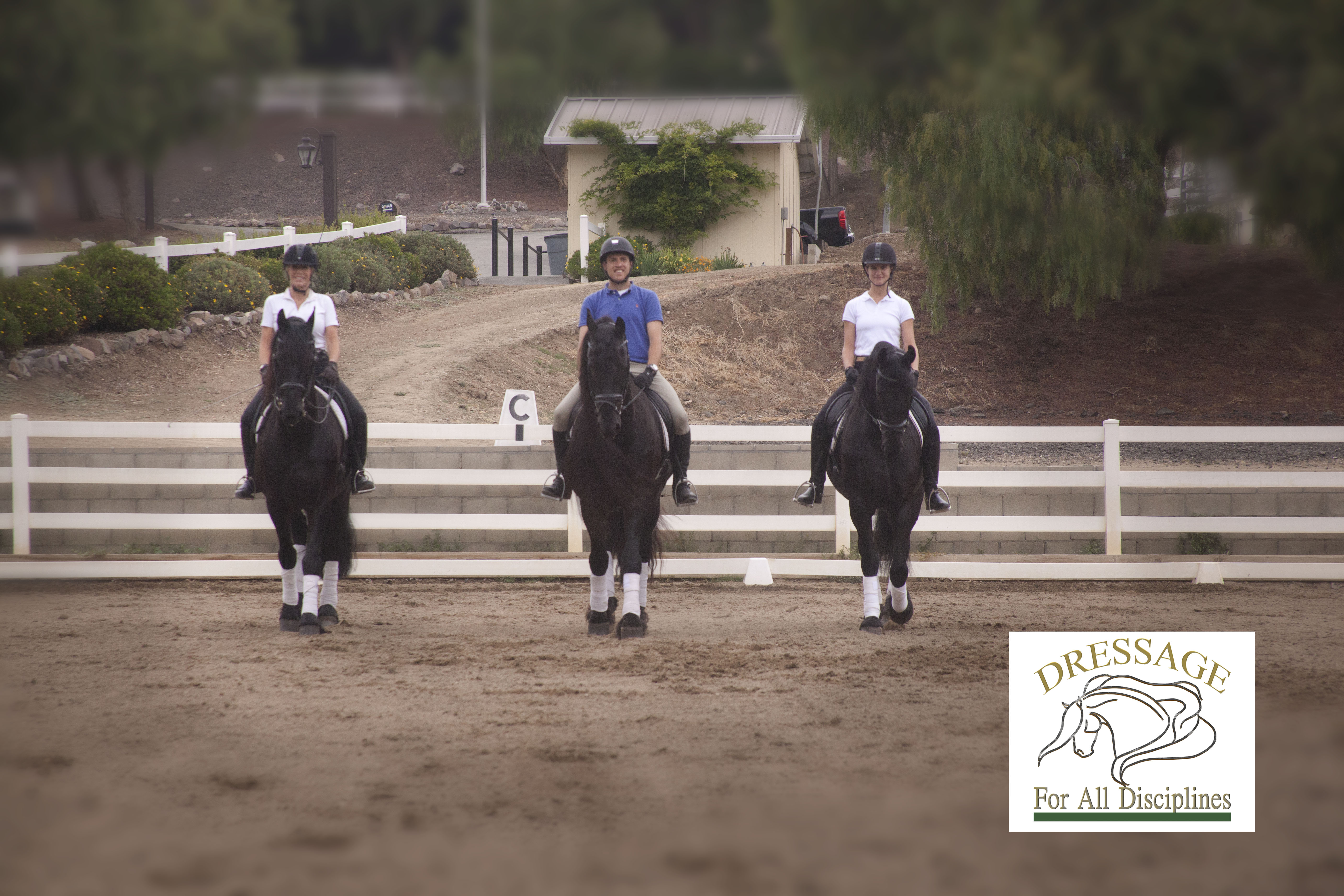 Dressage with Friesians
