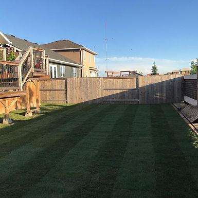 Evergreen Backyard