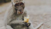 """Fetmaepidemin del 3: Om socialt umgänge, firande och tävlingar, och om att """"äta upp""""."""
