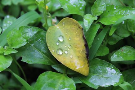 Plüviyometre (Yağmur Ölçer)