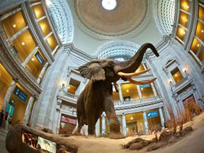 Doğa Tarihi Müzesi Sanal Turu