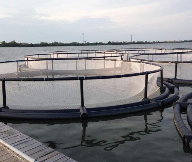 Viviere plutitoare (flotabile)
