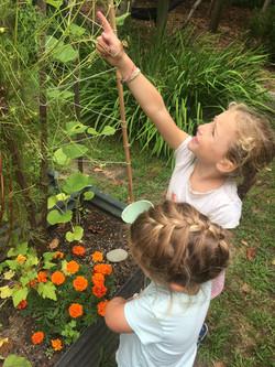 STEAM gardening.jpg