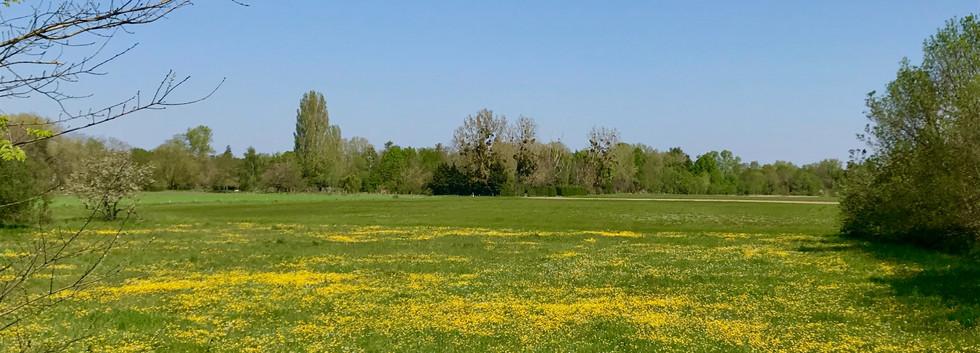 vue sur champs