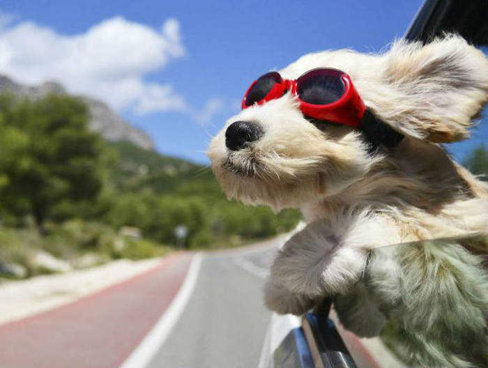 Requisitos para ingresar a Brasil con animales domésticos