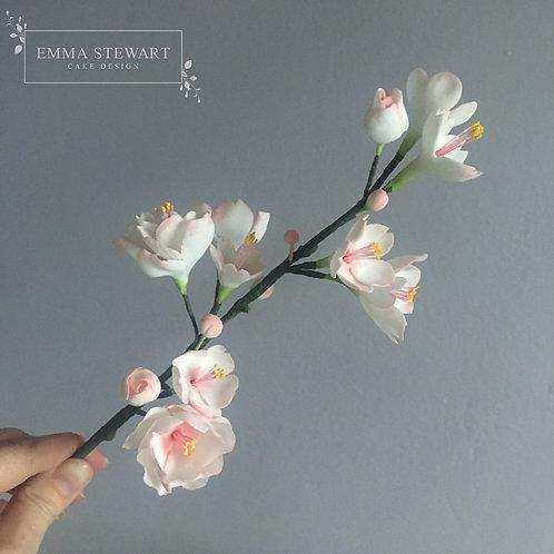 Cherry Blossom Workshop