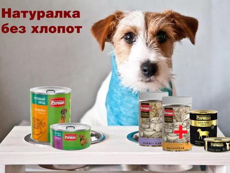 Альтернатива натуральному кормлению собак!