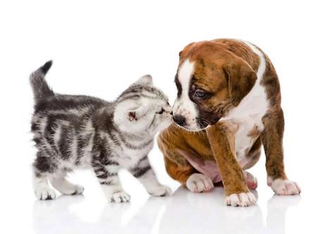 Итак, вы завели котёнка или щенка, что надо знать: чем кормить, что для него нужно приобрести и когд