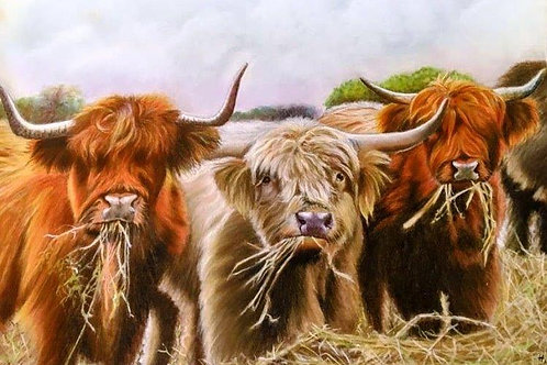 'Highland Cattle' by Helena Anderson