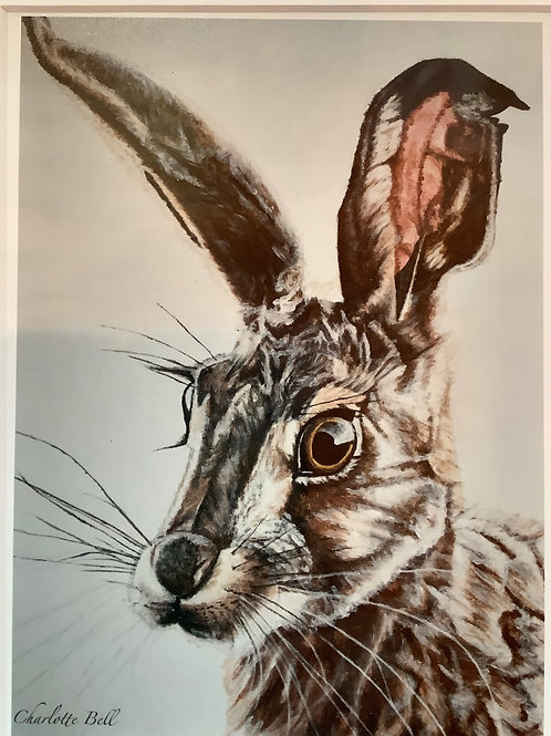 'Hare, side view' mounted print from original art by Charlotte Bell