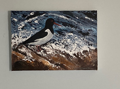 'Oyster Catcher' by Gillian Thompson