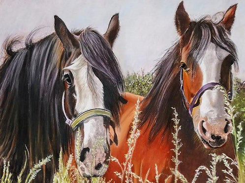 'Old pals at Hillside' by Helena Anderson
