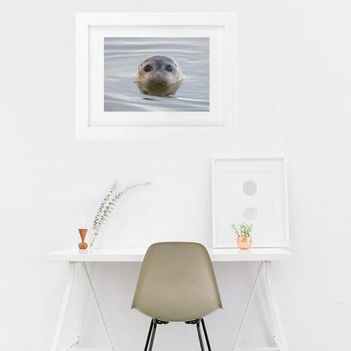 Seal at Brancaster Creake, Norfolk