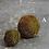 Thumbnail: Roost Bound Moss Balls