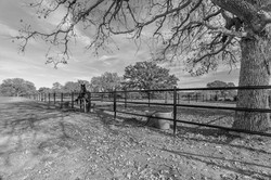 Silver Horse Ranch Country Living