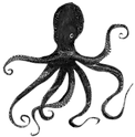 Octopus_edited.png