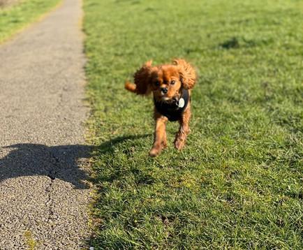 Little Rupert