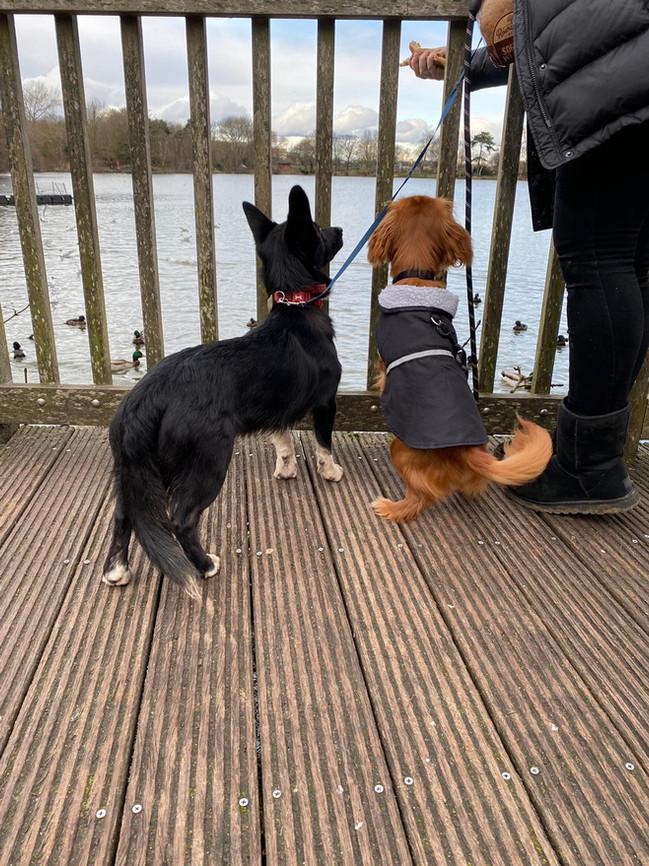 Bobby & Rupert feeding the ducks