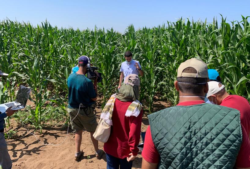Formation Maïs fourrager: bien conserver son ensilage pour optimiser sa qualité nutritionnelle
