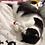 Thumbnail: Joint Catnip Toy