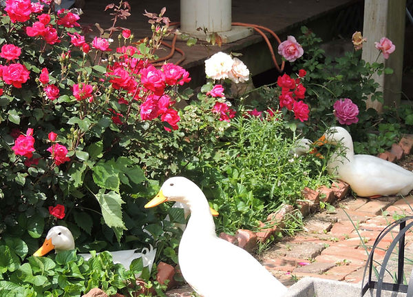 roses and ducks.jpg