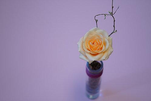 Peach Spice Bud Vase