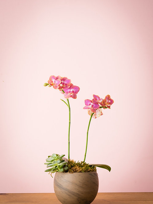Pink Orchid and Succulent Vase