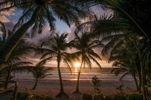 The sunset on Tulum beach with the view between two palm trees.
